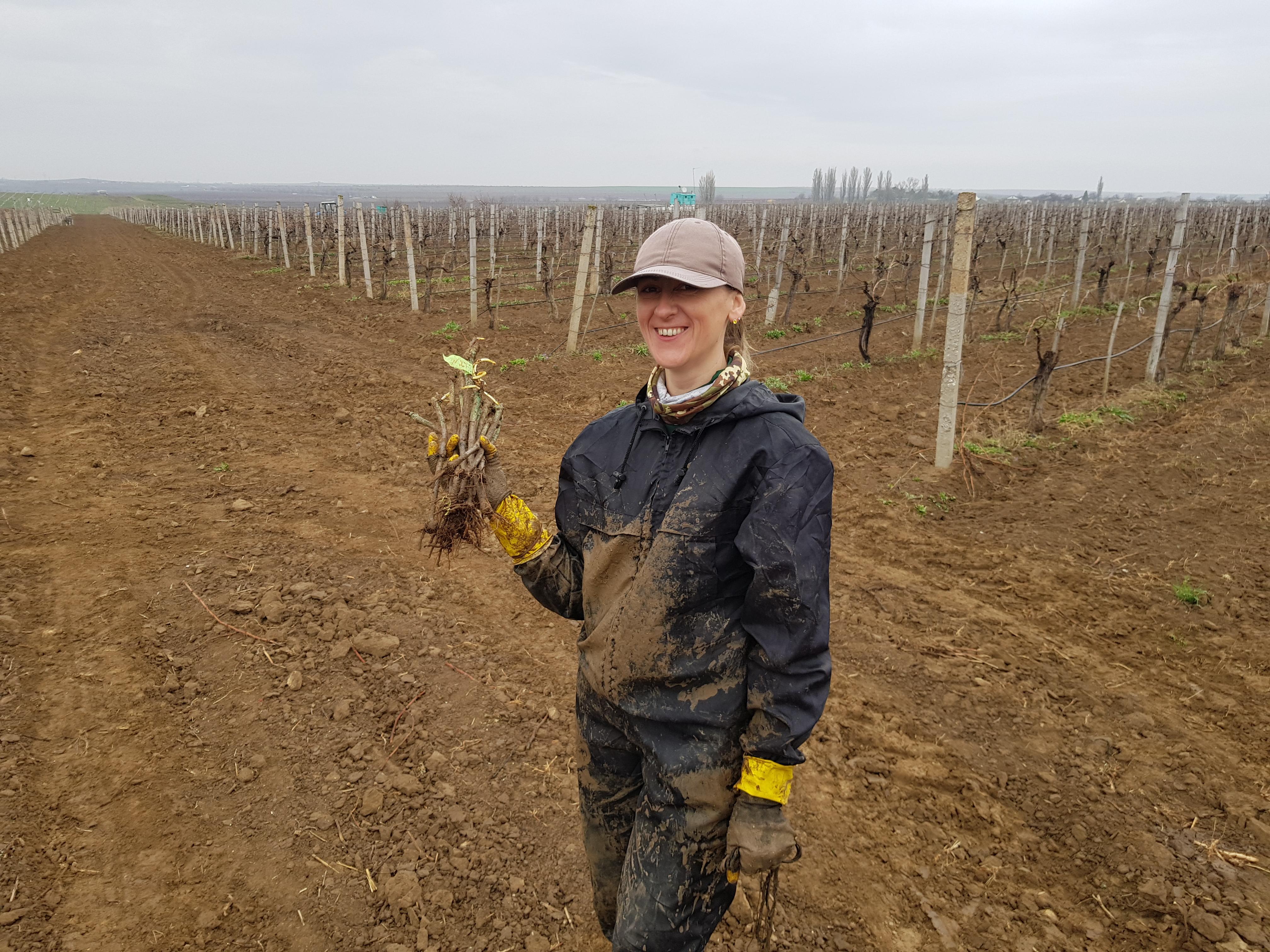 Квинтэссенция вина и устойчивое виноградарство